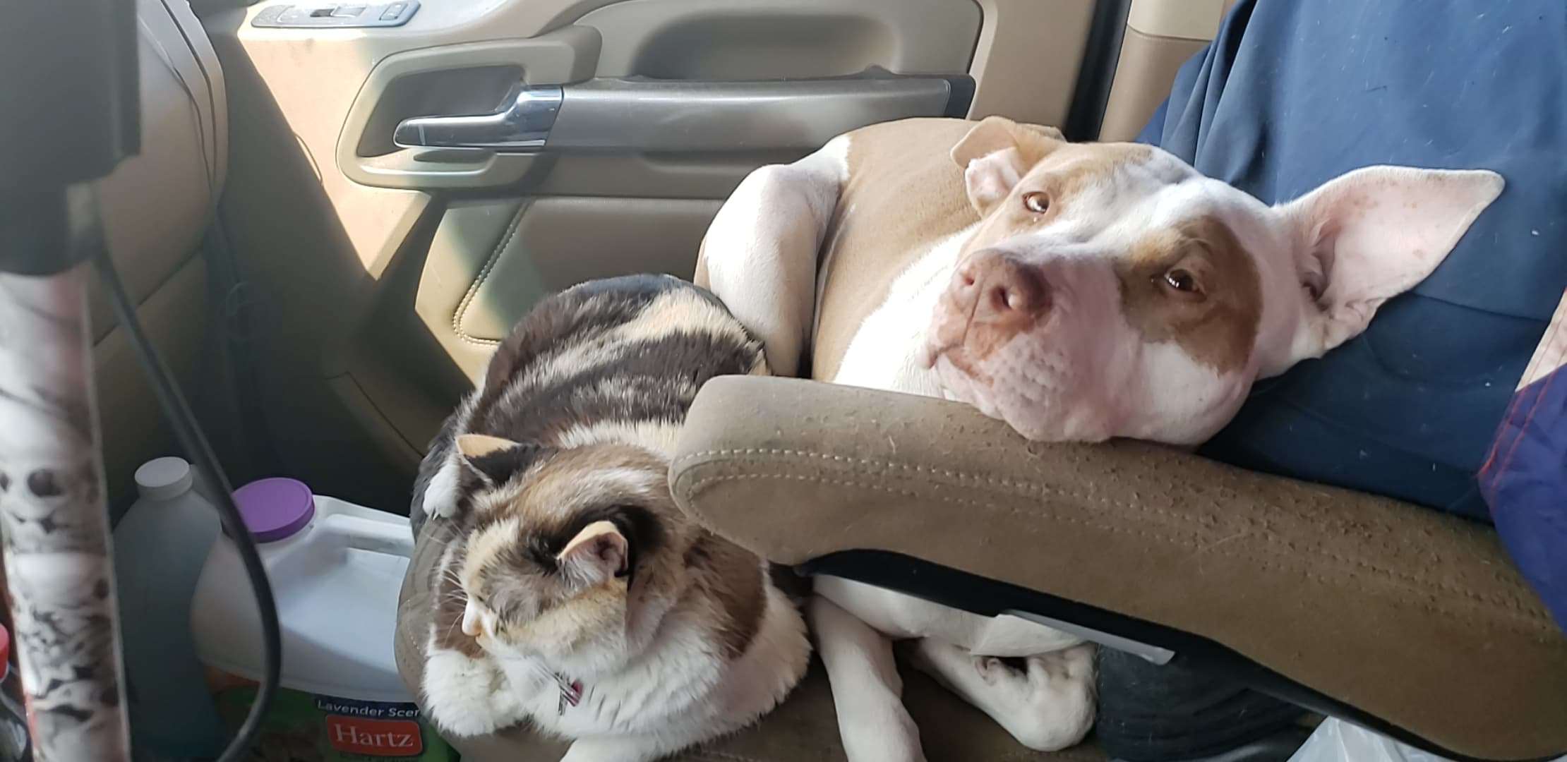 Pet Care on the Road